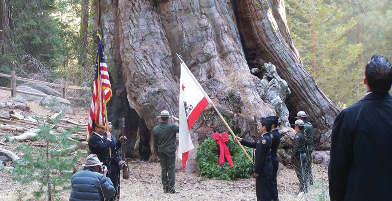 Which Giant Sequoia is the World's Second-Largest Tree?