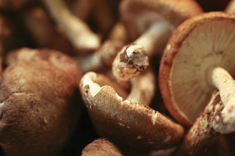 Reinforce flu shots with medicinal mushroom