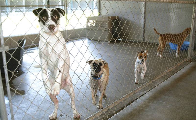Cities stay in animal shelter kennels