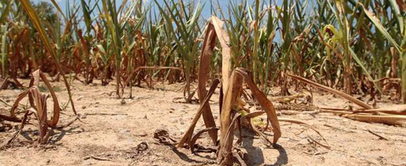 County proclaims drought emergency