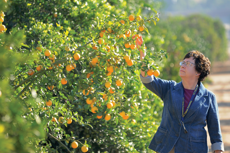 Seminar series begins for citrus growers
