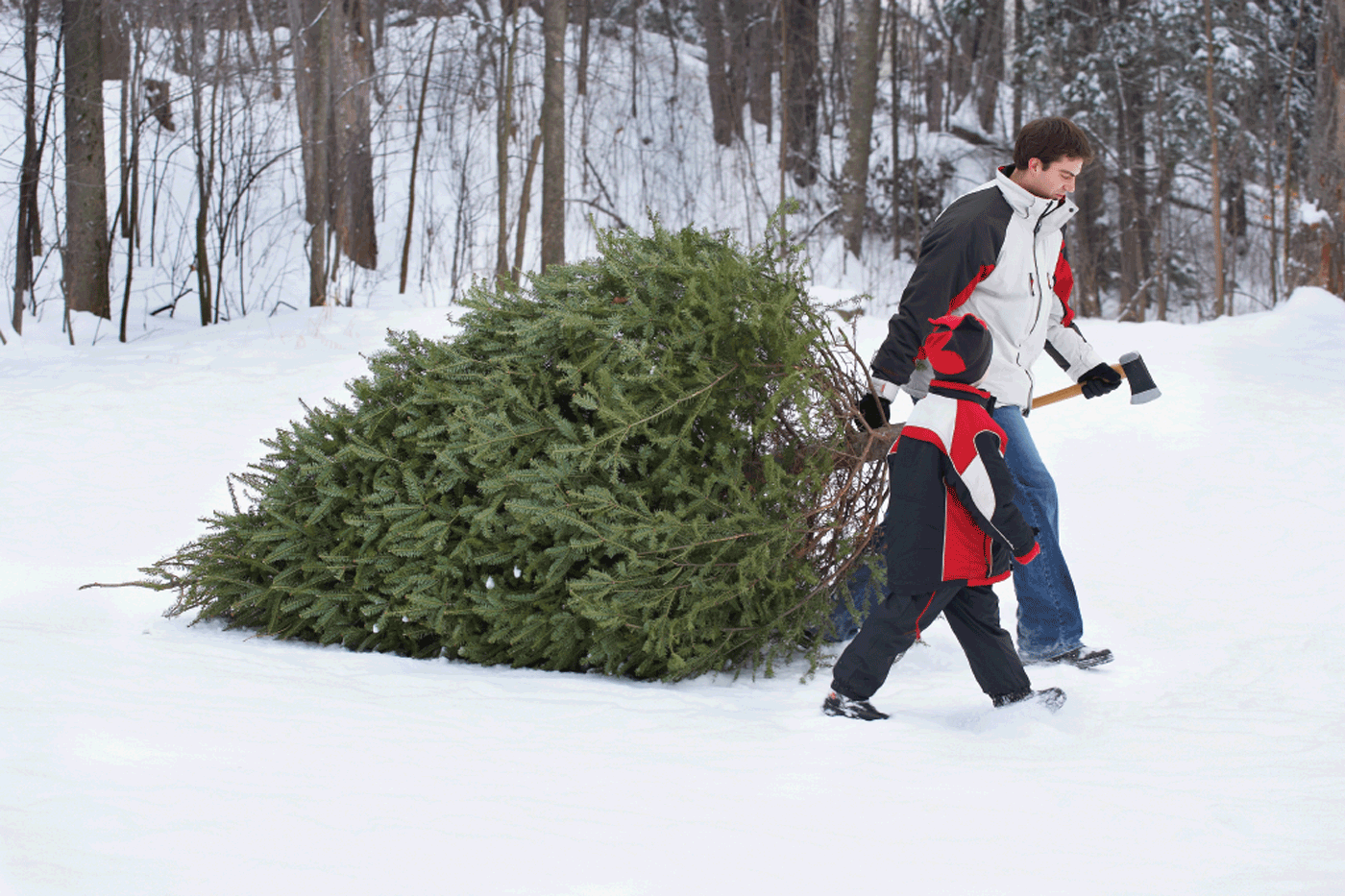Forest Service offers 4th-graders chance to cut down their own Christmas tree