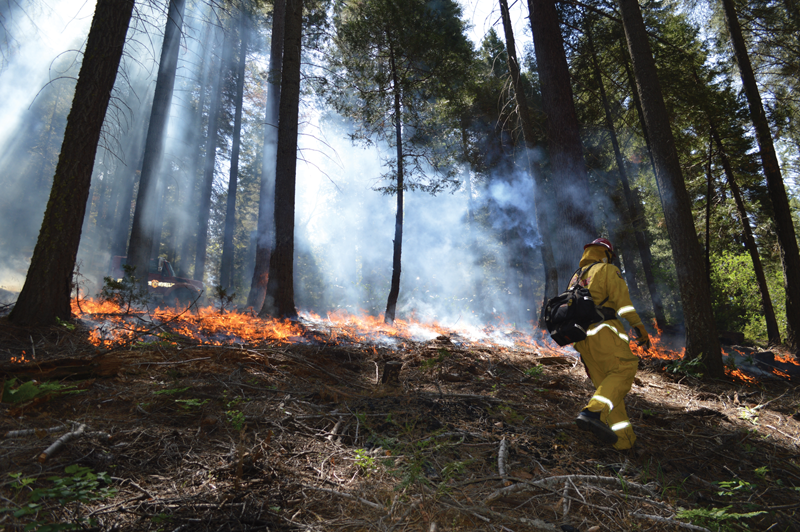 Three Rivers receives $27,000 to prevent wildfires