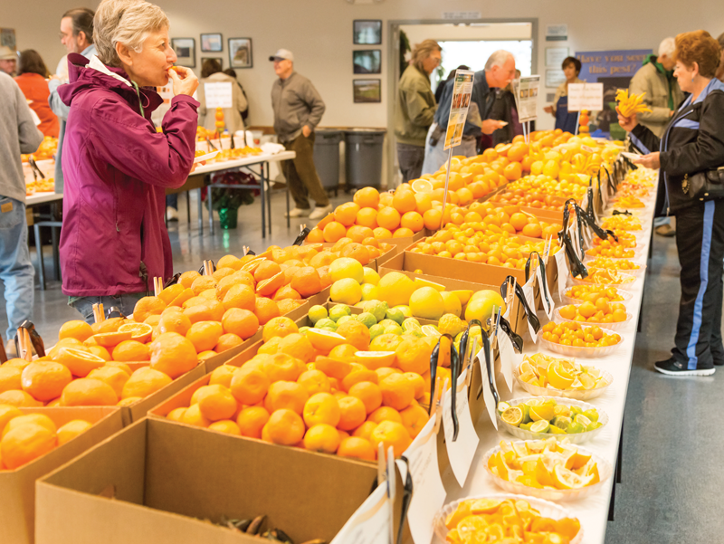 Lindcove Research and Extension Center holds annual Citrus Display and Tasting on Dec. 9