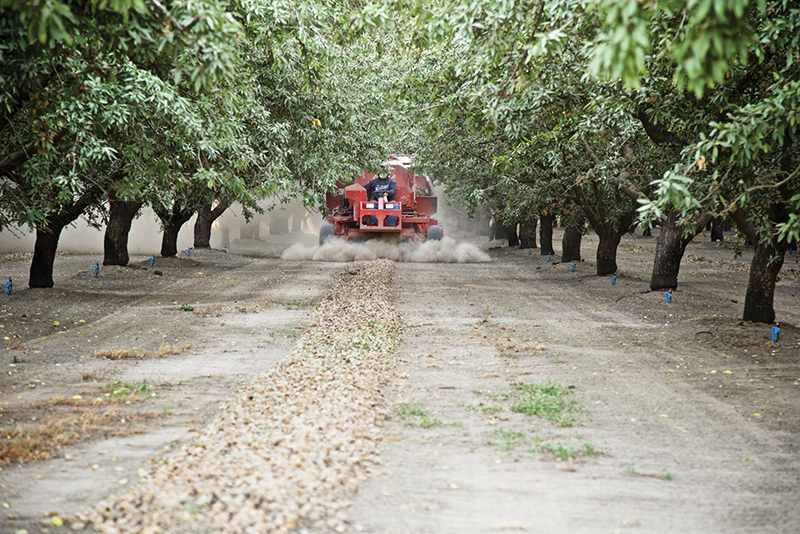 Almonds shake the dust off with new tech