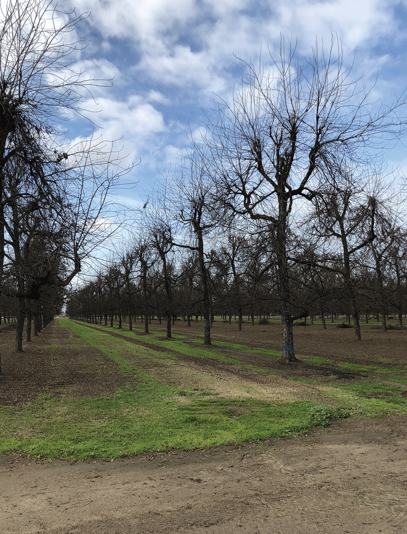 City of Visalia hired contractor to survey, improve the City's 1,200+ acres of ag mostly farmed in nuts