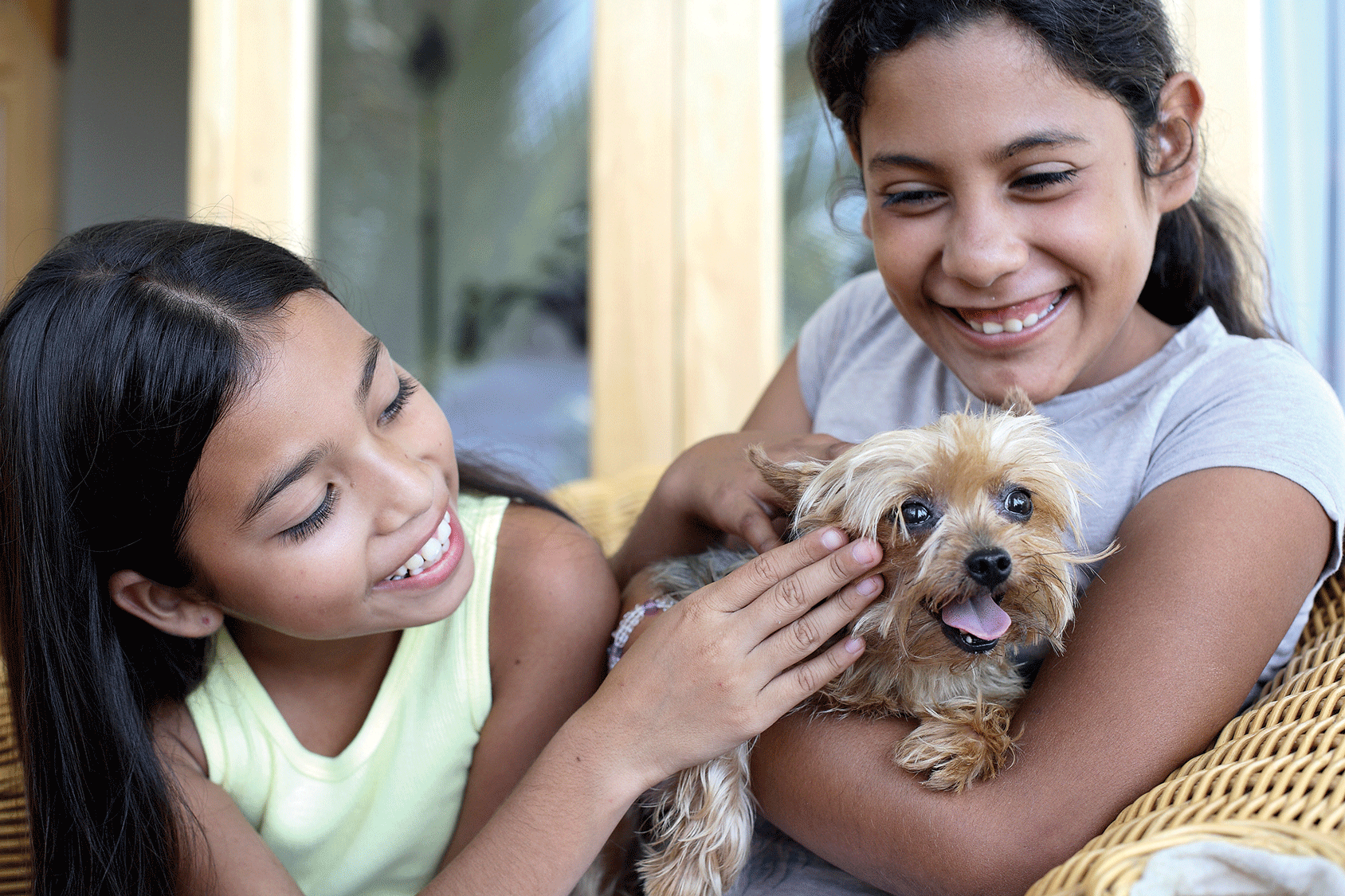 5 tips to successfully bring a new pet into your home