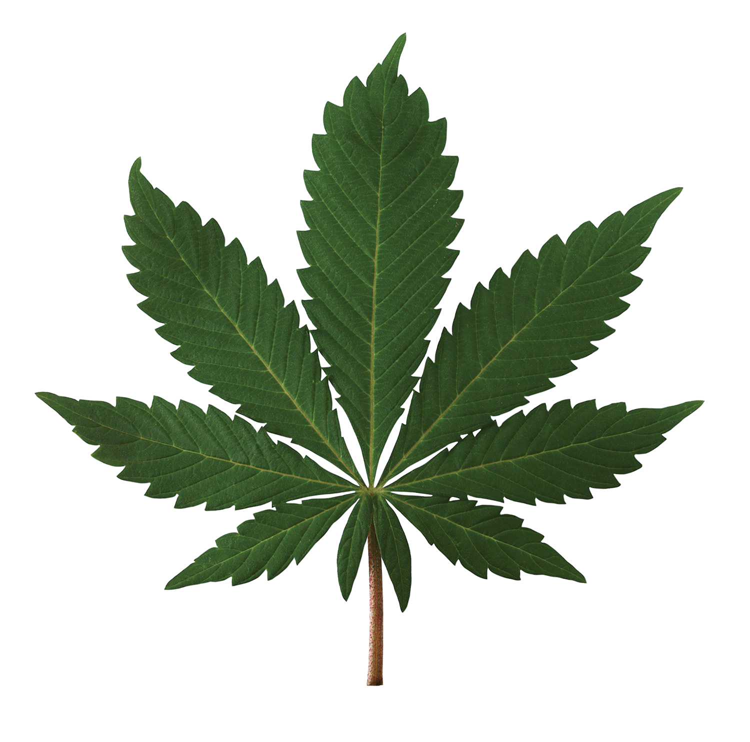 County temporarily bans industrial hemp due to lack of regulations